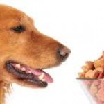 dogwithfood