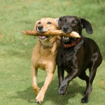Dogswithstick