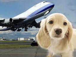 PuppyAirplane
