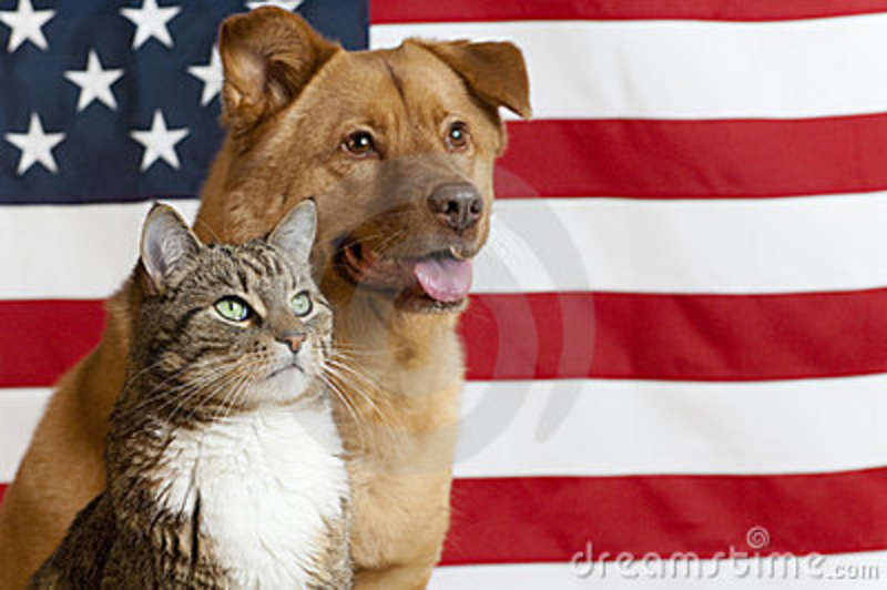american-cat-dog-9338764