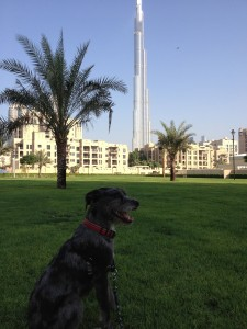 DubaiDog