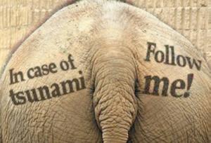 ElephantTsunami