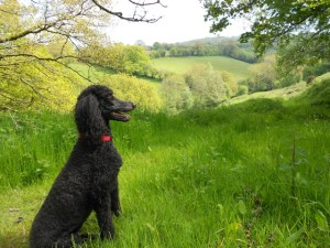 Elli in the Pasture