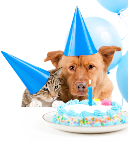 Calculating Dog and Cat Years