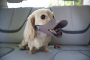 DuckbillDog