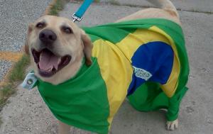 BrazilDog