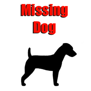 MissingDog