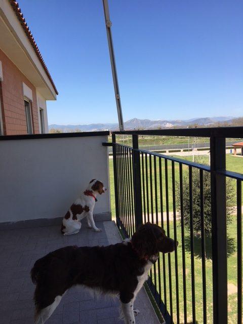 Pet Transport Testimonials | Animal Land Pet Movers