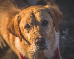 Pet Laws in South Africa